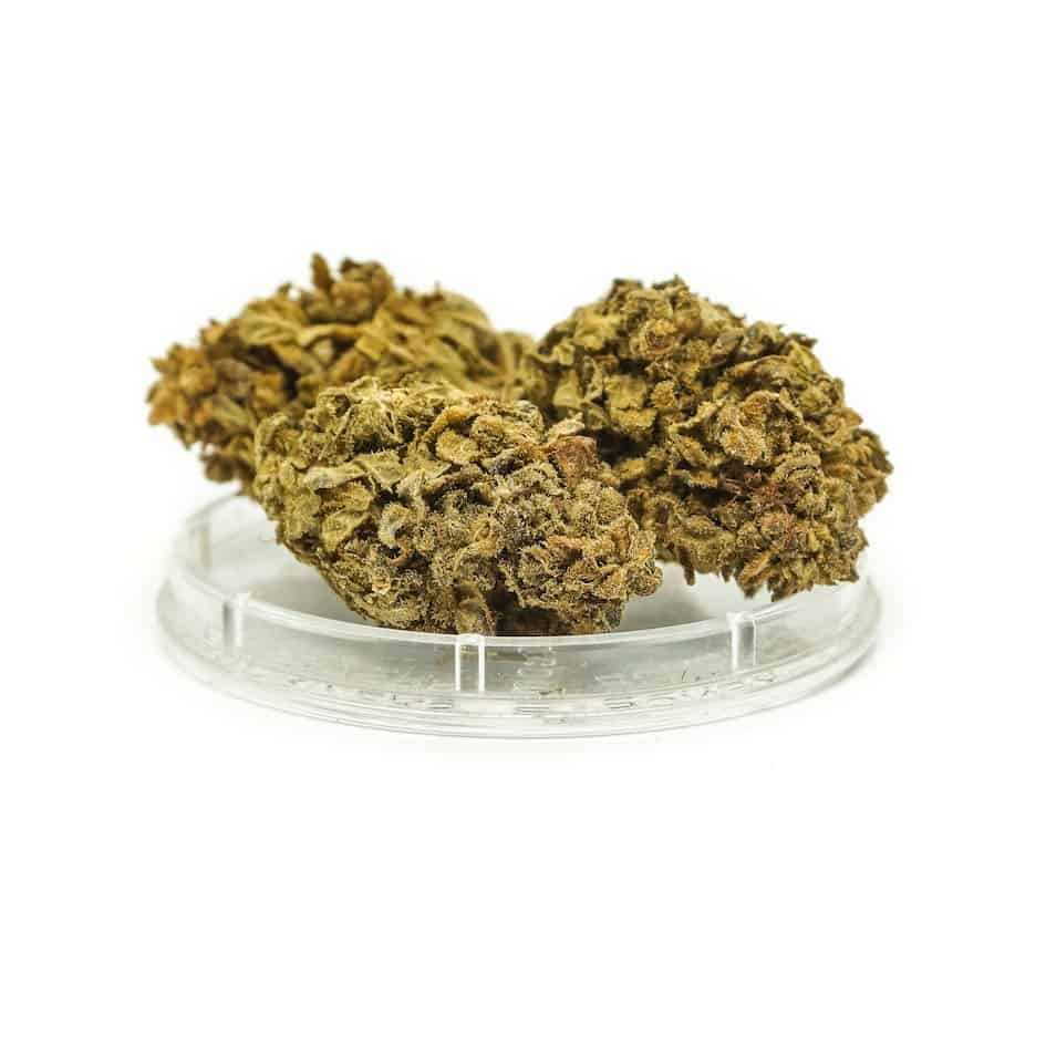 ORANGE BUD susz CBD