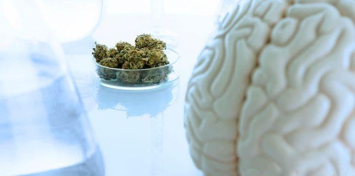 CBD a mózg