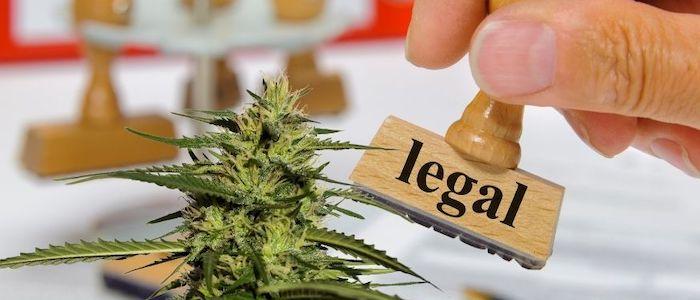Argumenty za legalizacją marihuany